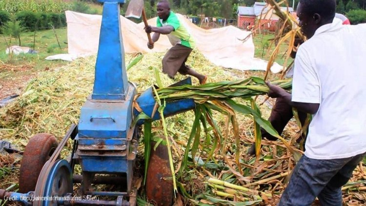 Agricultural Sector in Developing Countries Not Adequately Covered in OSH Laws