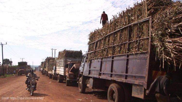 Transport Safety: Government Bans Transport of Sugarcane at Night