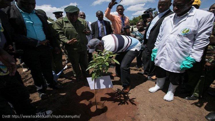 President Kenyatta Leads country in Tree planting
