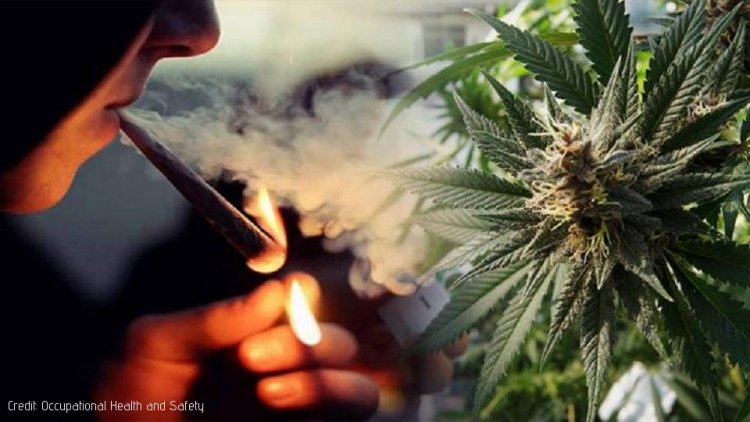 How South Africa's new Cannabis Ruling affects Employees - 6 Big Legal Questions Answered